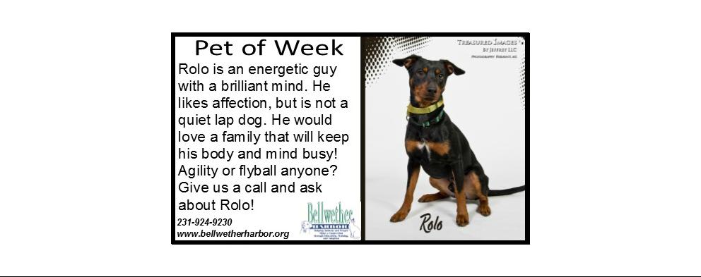 Adopt a Pet Today!