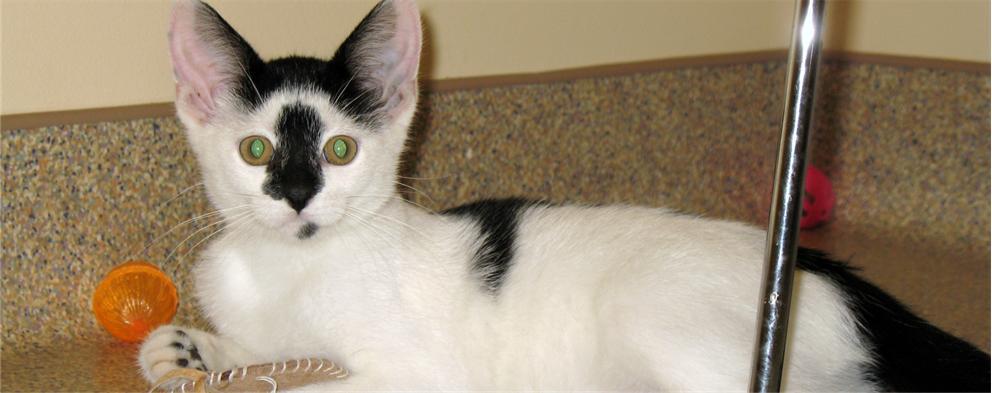 Starr's Kitten